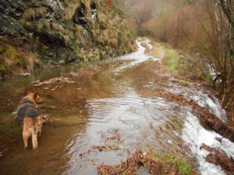 Route ou ruisseau ?