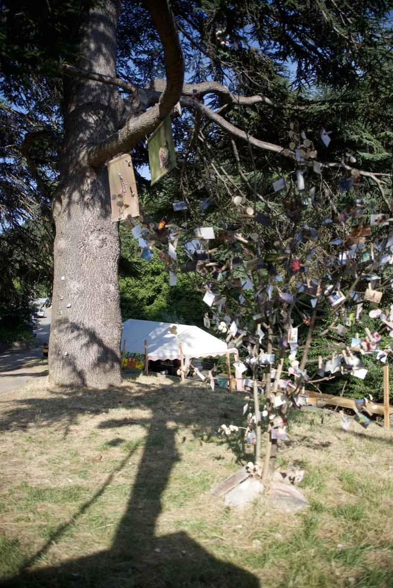 L'arbre à Photos de Pierre