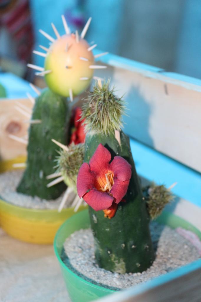 Cactus de Lespi