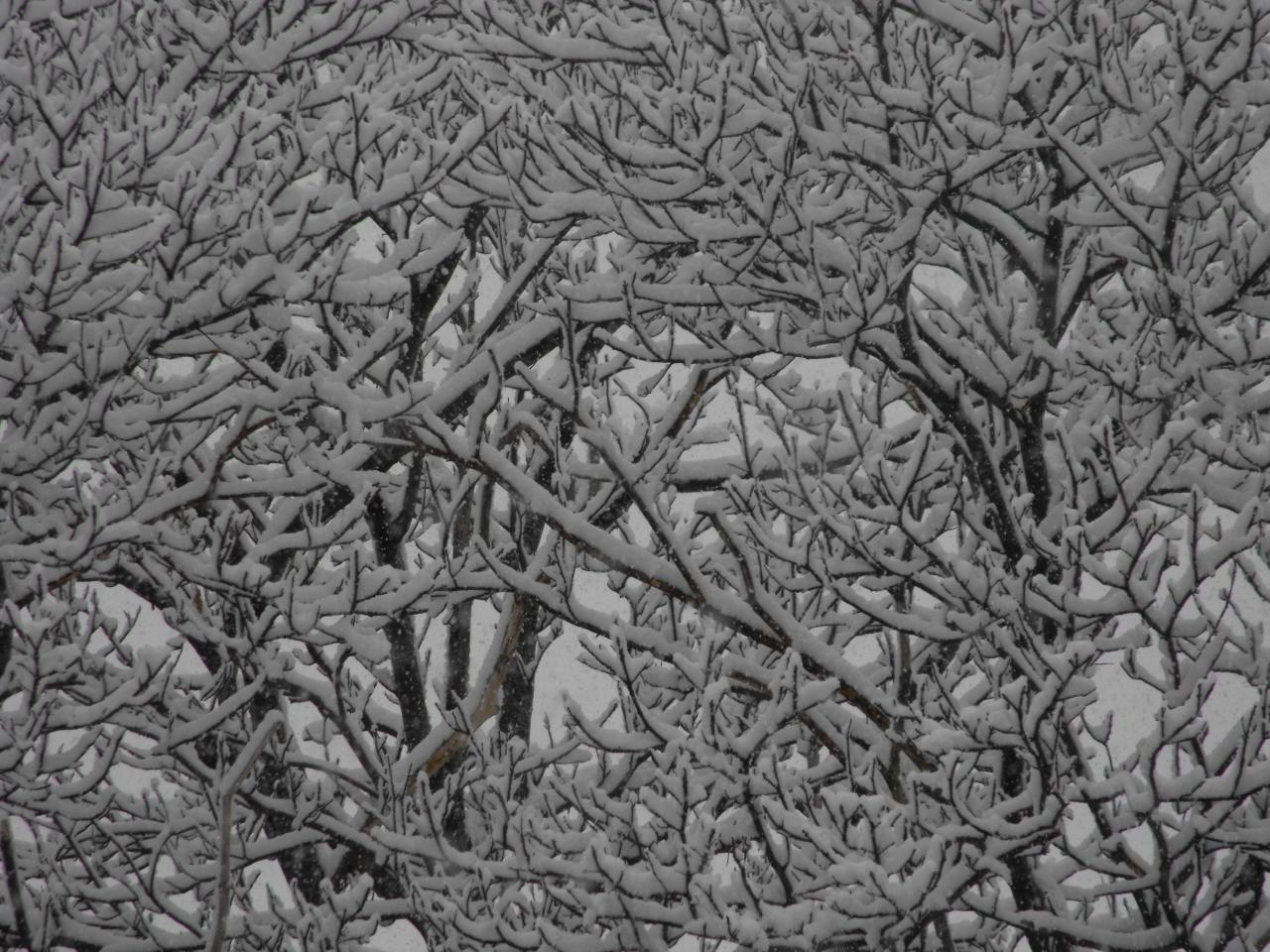 neige8